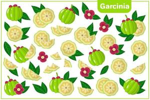Set of vector cartoon illustrations with Garcinia exotic fruits, flowers and leaves isolated on white background