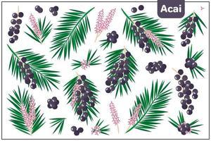 Conjunto de ilustraciones de dibujos animados vectoriales con frutas exóticas de acai aislado sobre fondo blanco. vector