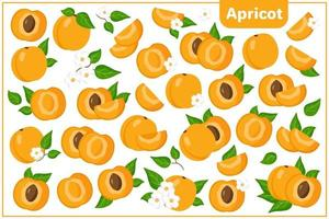 Set of vector cartoon illustrations with Apricot exotic fruits, flowers and leaves isolated on white background