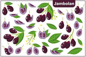 Set of vector cartoon illustrations with Jambolan exotic fruits, flowers and leaves isolated on white background