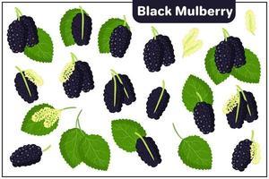 Conjunto de ilustraciones de dibujos animados vectoriales con frutas exóticas de morera negra, flores y hojas aisladas sobre fondo blanco vector