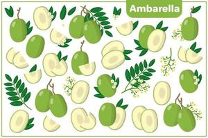 Set of vector cartoon illustrations with Ambarella exotic fruits, flowers and leaves isolated on white background
