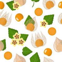 Vector de dibujos animados de patrones sin fisuras con physalis peruviana frutas exóticas, flores y hojas sobre fondo blanco.