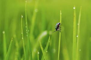 Insecto a todo color sobre el césped después de la lluvia foto