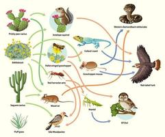 Diagram showing animal food chain on white background vector