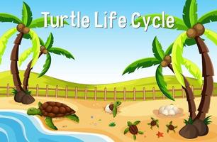 Many turtles on the beach scene with Turtle Life Cycle Font vector