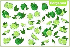 Conjunto de ilustraciones de dibujos animados vectoriales con frutas exóticas de bergamota enteras, medias, cortadas, flores y hojas aisladas sobre fondo blanco vector