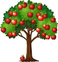 Many red apples on a tree isolated on white background vector
