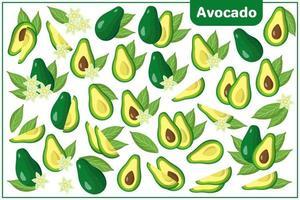 Conjunto de ilustraciones de dibujos animados vectoriales con frutas exóticas de aguacate, flores y hojas aisladas sobre fondo blanco vector