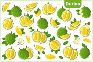 Set of vector cartoon illustrations with Durian exotic fruits, flowers and leaves isolated on white background