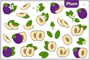 Set of vector cartoon illustrations with Plum exotic fruits, flowers and leaves isolated on white background