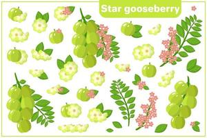 Set of vector cartoon illustrations with Star Gooseberry exotic fruits, flowers and leaves isolated on white background