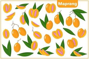 Set of vector cartoon illustrations with Maprang exotic fruits and leaves isolated on white background