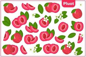 Set of vector cartoon illustrations with Pluot exotic fruits, flowers and leaves isolated on white background
