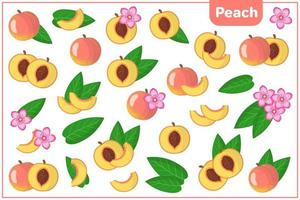 Set of vector cartoon illustrations with Peach exotic fruits, flowers and leaves isolated on white background