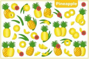 Set of vector cartoon illustrations with Pineapple exotic fruits, flowers and leaves isolated on white background