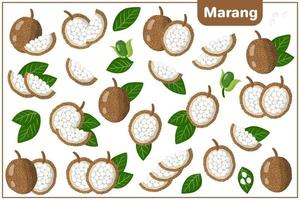 Set of vector cartoon illustrations with Marang exotic fruits, flowers and leaves isolated on white background