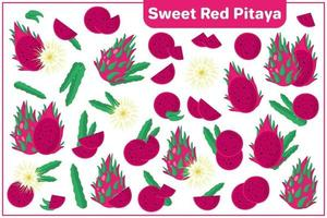 Set of vector cartoon illustrations with Sweet Red Pitaya exotic fruits, flowers and leaves isolated on white background
