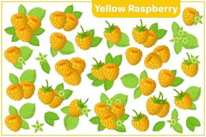 Set of vector cartoon illustrations with Yellow Raspberry exotic fruits isolated on white background