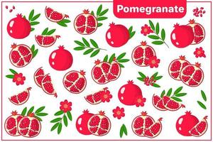 Set of vector cartoon illustrations with Pomegranate exotic fruits, flowers and leaves isolated on white background