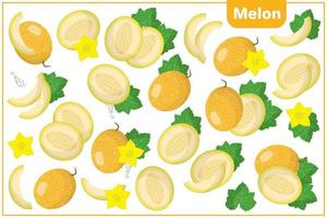 Set of vector cartoon illustrations with Melon exotic fruits, flowers and leaves isolated on white background