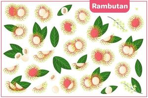 Set of vector cartoon illustrations with Rambutan exotic fruits, flowers and leaves isolated on white background