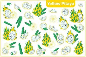 Set of vector cartoon illustrations with Yellow Pitaya exotic fruits, flowers and leaves isolated on white background