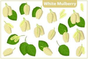 Set of vector cartoon illustrations with White Mulberry exotic fruits, flowers and leaves isolated on white background