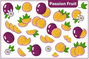 Set of vector cartoon illustrations with Passion Fruit exotic fruits, flowers and leaves isolated on white background