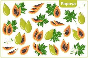 Set of vector cartoon illustrations with Papaya exotic fruits, flowers and leaves isolated on white background