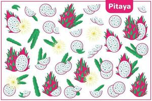 Set of vector cartoon illustrations with Pitaya exotic fruits, flowers and leaves isolated on white background