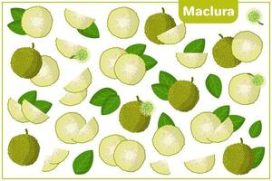 Set of vector cartoon illustrations with Maclura exotic fruits, flowers and leaves isolated on white background