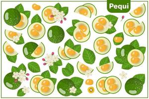 Set of vector cartoon illustrations with Pequi exotic fruits, flowers and leaves isolated on white background