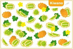 Set of vector cartoon illustrations with Kiwano exotic fruits, flowers and leaves isolated on white background
