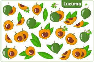 Set of vector cartoon illustrations with Lucuma exotic fruits, flowers and leaves isolated on white background