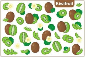 Set of vector cartoon illustrations with Kiwifruit exotic fruits, flowers and leaves isolated on white background