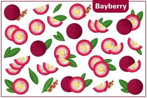 Set of vector cartoon illustrations with Bayberry exotic fruits, flowers and leaves isolated on white background