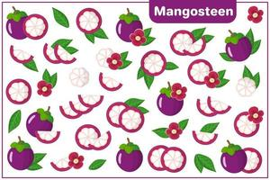 Set of vector cartoon illustrations with Mangosteen exotic fruits, flowers and leaves isolated on white background
