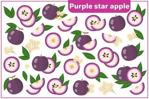 Set of vector cartoon illustrations with Purple Star Apple exotic fruits isolated on white background