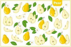conjunto de ilustraciones de dibujos animados de vectores con frutas exóticas de pera, flores y hojas aisladas sobre fondo blanco