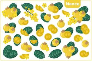 Set of vector cartoon illustrations with Nance exotic fruits, flowers and leaves isolated on white background