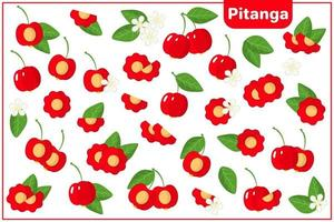 Set of vector cartoon illustrations with Pitanga exotic fruits, flowers and leaves isolated on white background