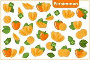 Set of vector cartoon illustrations with Persimmon exotic fruits, flowers and leaves isolated on white background