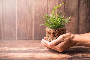 Hand holding a plant pot photo