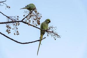 pájaros verdes en la vegetación verde foto