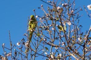 pájaro verde en la vegetación verde foto