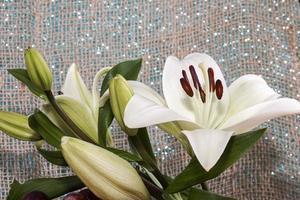Flor de lirio asiático blanco en el jardín foto