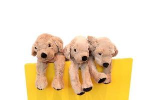 Muñeca de juguete para perros con fondo blanco. foto