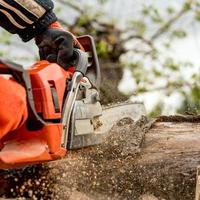 Man saws firewood with a red chainsaw photo