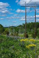 Power lines and flowers photo